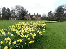 Narzissenbetten am Chorleywood-Haus-Zustand, Hertfordshire stockfotografie
