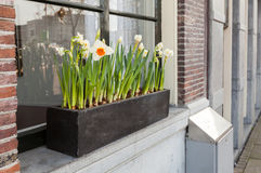 Narzissenblumen auf Fensterbrett in Amsterdam Lizenzfreie Stockbilder