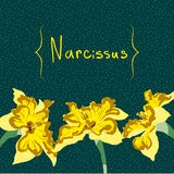 Narzissenblumen-Kartenelement Stockfotografie