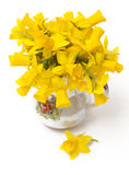 Narzissenblumen lokalisiert Lizenzfreies Stockfoto