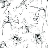 Narzissenblumen Nahtloses Muster Stockfoto