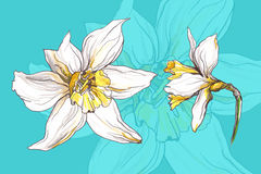 Narzissenfrühlingsblume Lizenzfreies Stockbild