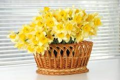 Narzissenkorb, Ostern, Narzissenblumenfrauen des Frühlinges gelber oder Muttertag stockfoto