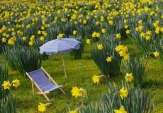 Narzissenwiese mit Sonnenschirm und Klappstuhl stockfotografie