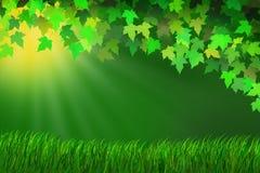 Nasłoneczniona łąka Obraz Stock