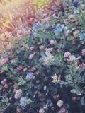 Nasłoneczniona łąka Obrazy Stock