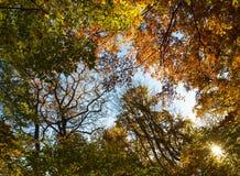 Nasłoneczniona jesień Zdjęcie Stock
