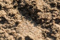 Nasłoneczniona piaskowata plaża groszkuje makro- zbliżenie obrazy royalty free