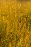 nasłoneczniona trawa w lato łące Zdjęcia Royalty Free