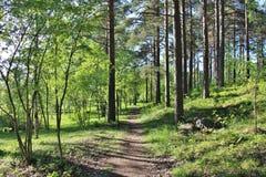 Nasłoneczniony lasowy ślad Obrazy Stock