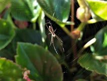 Nasłoneczniony pająk i sieć zdjęcie royalty free