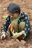 Nas crianças da montanha do grupo étnico de Hmong, tenha o divertimento plantando a couve Fotografia de Stock