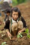 Nas crianças da montanha do grupo étnico de Hmong, tenha o divertimento plantando a couve Fotografia de Stock Royalty Free