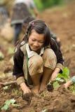 Nas crianças da montanha do grupo étnico de Hmong, tenha o divertimento plantando a couve Fotos de Stock Royalty Free