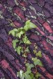 Nas folhas de madeira de um verde da textura Imagem de Stock Royalty Free
