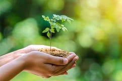 Nas mãos das árvores que crescem a mão fêmea do fundo do verde de Bokeh das plântulas que guarda a conservação da floresta da gra imagens de stock