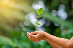 Nas mãos das árvores que crescem plântulas Bokeh esverdeia a mão fêmea do fundo que guarda a árvore na conservação da floresta da fotografia de stock royalty free