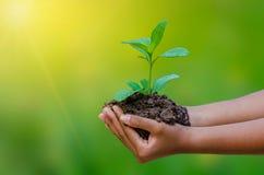 Nas mãos das árvores que crescem plântulas Bokeh esverdeia a mão fêmea do fundo que guarda a árvore na conservação da floresta da fotos de stock royalty free