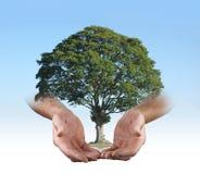 Nas mãos seguras de um cirurgião de árvore Fotografia de Stock Royalty Free