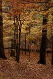 Nas madeiras Imagem de Stock