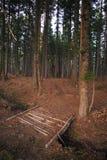 Nas madeiras Foto de Stock