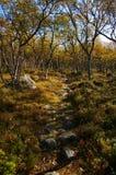 Nas madeiras do outono Fotografia de Stock Royalty Free