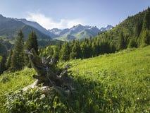 Nas montanhas Imagem de Stock Royalty Free
