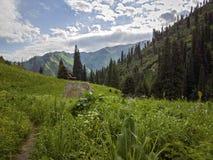 Nas montanhas Fotografia de Stock