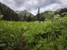 Nas montanhas Foto de Stock