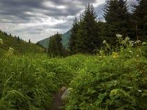 Nas montanhas Imagem de Stock