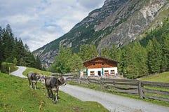 Nas montanhas de Stubai em Tirol, Áustria Fotos de Stock