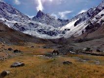 Nas montanhas nós estamos livres Fotografia de Stock Royalty Free