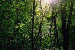 Nasłoneczneni lat drewna Obraz Royalty Free