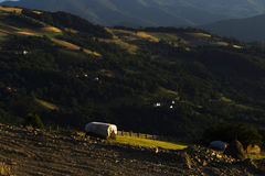 Nasłoneczniona halizna Zdjęcia Stock