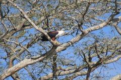 Nas partes superiores da árvore Fotografia de Stock Royalty Free