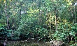 Nas profundidades da floresta úmida Foto de Stock
