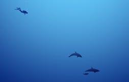Nas profundidades do mar Foto de Stock