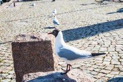 Nas ruas de Helsínquia fotografia de stock