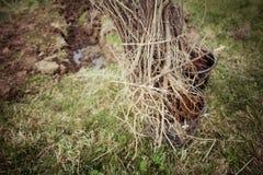 nasadzeń drzew Obrazy Stock