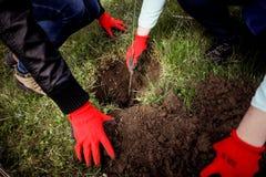 nasadzeń drzew Fotografia Royalty Free