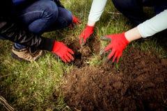 nasadzeń drzew Obrazy Royalty Free