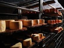 Nasaler Käse auf Metallregalen in der Grotte lizenzfreies stockfoto