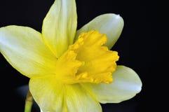 nasals Imagen de archivo libre de regalías