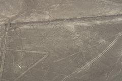 nasca муравея Стоковая Фотография RF