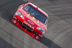 NASCAR: 26. Februar Shelby amerikanisches GT 350 Lizenzfreie Stockfotos