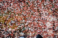 NASCAR: May 11 Digital Ally 400 royalty free stock photography