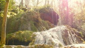 Nascente de água puro da floresta 4K da montanha - 14 video estoque