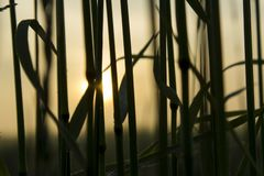 NASCER DE O SOL Fotos de Stock