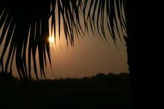 NASCER DE O SOL Olhando o sol através das folhas das palmeiras imagem de stock