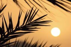 Nascer do sol. Imagens de Stock